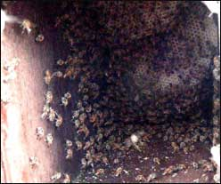 an empty birdhouse makes a lovely hive